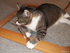 Bastian's feather, 1 - for Happy Caturday