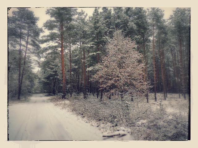 Winter im Brandenburger Land