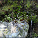 An interesting granite block with its various lichens. Worth viewing on large.