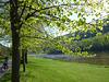 Frühling im Elbtal bei Wehlen