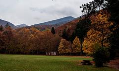 l'automne en forêt de Saoû (Drôme)