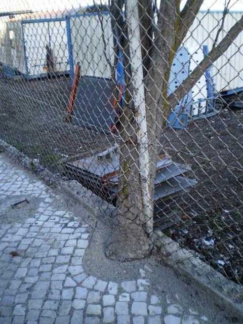 Despising a fence...