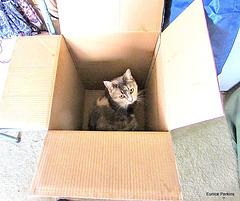 Kitty In a Box.