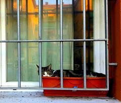 La gattina Anny...se la gode tutto il giorno..salutando chi passa
