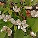Quince blossom. H. A. N. W. E. everyone!