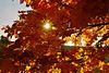 Herbstsonne  - Autumn Sun - mit PiP