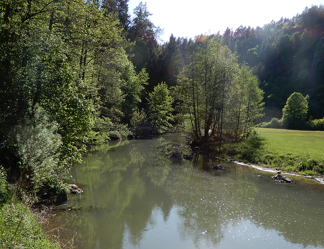 Die Wisent in Franken
