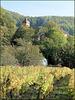 Montigny-les-Arsures (39) 19 octobre 2018. Vignoble d'Arbois.