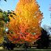 En parure d'automne