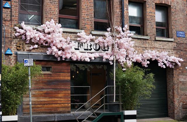 Audacious artificial blossom display...