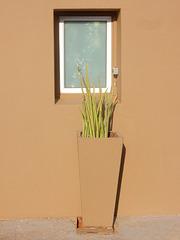 window, planter