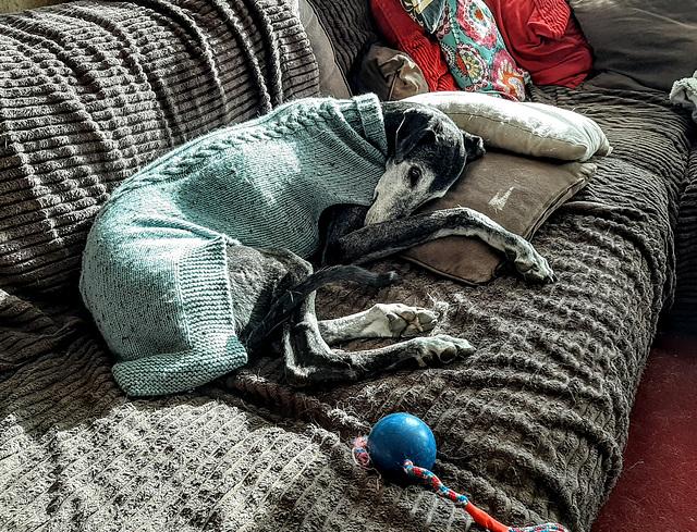 Murphy slaapt uit