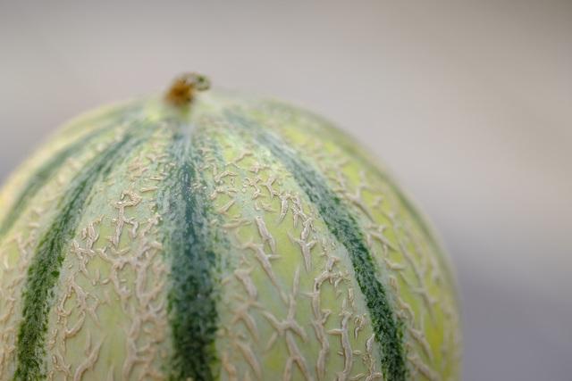 Melon Fuji 90mm 1
