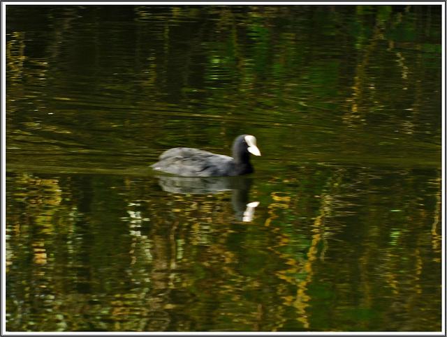 Reflets à  la réserve naturelle de Romelaere (62)