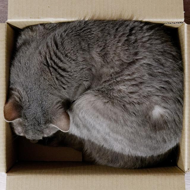 Comment obtenir un chat carré