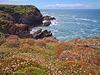 Wild Flowers along the Cliffs