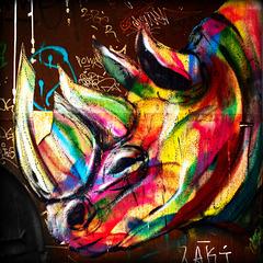 multi-colored rhino