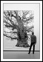 Portrait d'un arbre