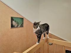 Kiki on the catwalk...