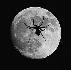Frau im Mond