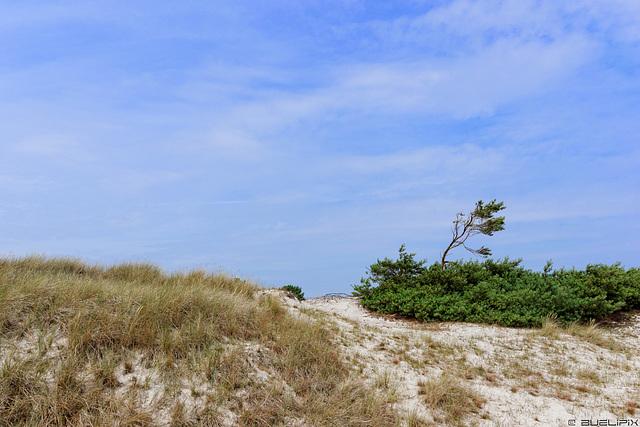 Dünen im Nationalpark Vorpommersche Boddenlandschaft (© Buelipix)