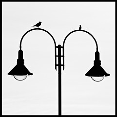 Street Lamp with Birds