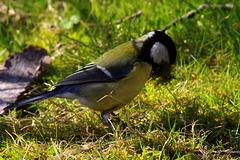 Afin de renforcer le nid