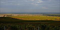 Weinregion