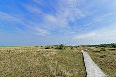durch die Dünen im Nationalpark Vorpommersche Boddenlandschaft (© Buelipix)