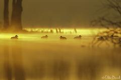 magie du début de journée sur les étangs