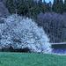 Frühling am Metelisweiher