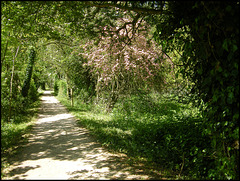 Thames Path in spring