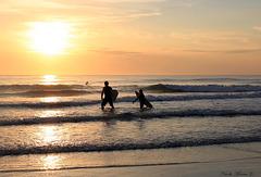 Gone Surfing...
