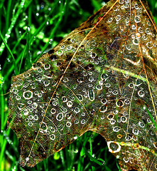 Raindropped Web
