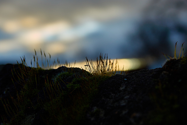 Little Mossy Sunset