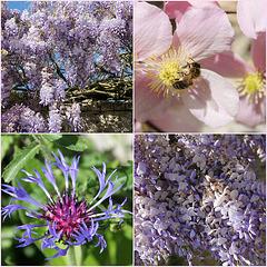 un printemps doux et gracieux