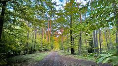 Wald - Hanau