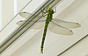 A visitor to our conservatory.