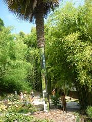 Le palmier aux miroirs .