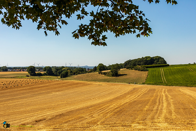 Nederlands-Limburg