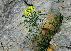 Flower in a stone