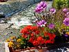 Bousson : i fiori sul fiume - (696)