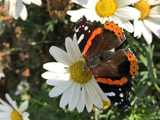 High on Nectar