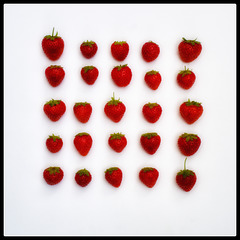 Strawberry Fields forever -SSC-