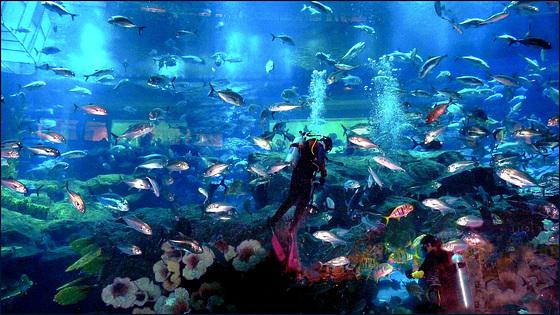 Il grande acquario di Dubai - (631)
