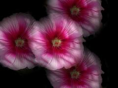 Les fleurs ne dorment pas la nuit [ON EXPLORE]
