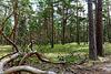 im Nationalpark Vorpommersche Boddenlandschaft (© Buelipix)