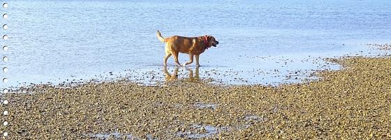 DANA: C'était bien la mer..... [ON EXPLORE]