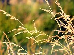 Just Grasses