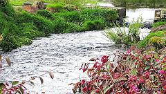 Flowing Stream,